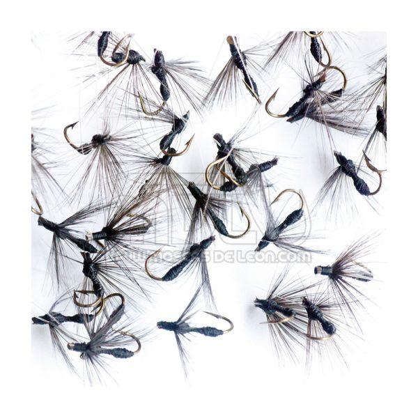 Ahogada Hormiga común