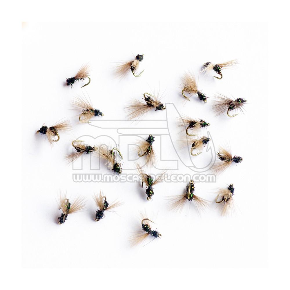 Hormiga negra CDC no.22